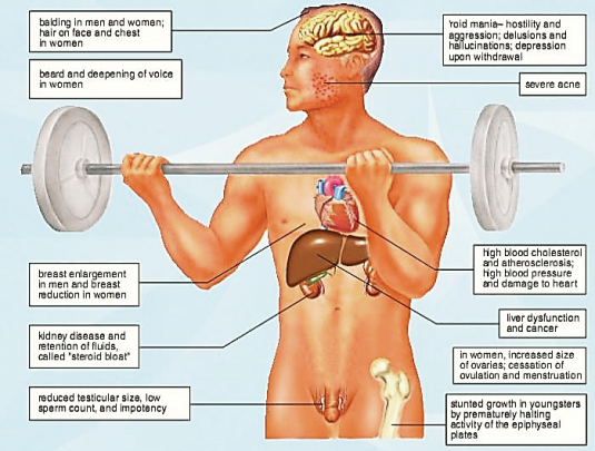 What effect does steroids have on your body das organon modell beispiele fassaden